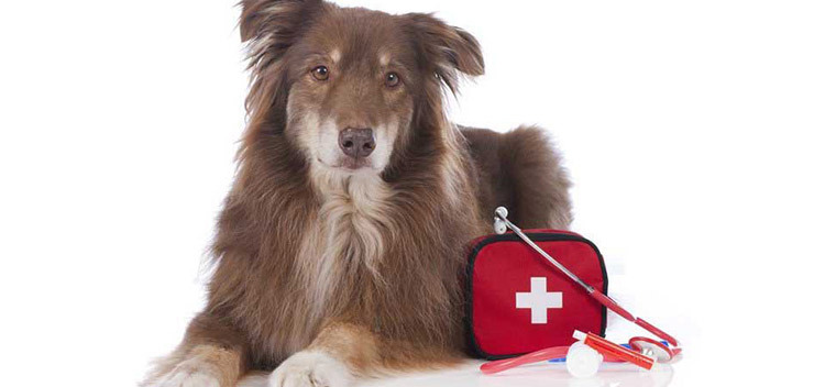 24-Hour 7 Days a Week Emergency Vet Cover