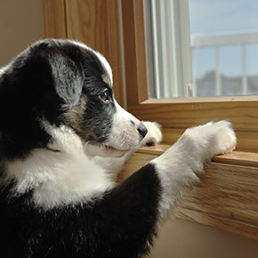 The Vet Whetstone advice for separation anxiety in dogs
