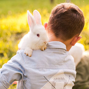 Learning from your rabbit's behaviour
