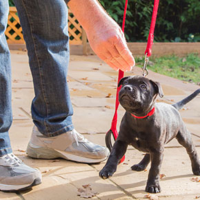 Albert's indispensable puppy training tips