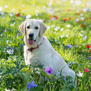 Is your dog allergic? The Vet Whetstone has the answer