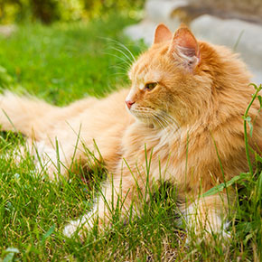 The Vet Whetstone explains why your cat may be eating less