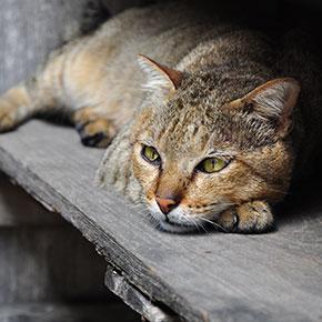 Three reasons cats soil indoors, from The Vet Whetstone