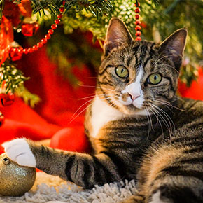 A happy cat in Whetstone means a happier Christmas
