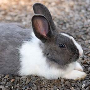 Are you giving your rabbit everything it needs?