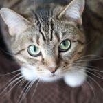 The Vet Whetstone's tips on kitty fertility