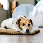 Dog neutering advice from The Vet Whetstone