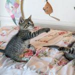 Vital tips for new kittens in Whetstone