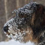 Essential cold-weather care for your dog