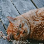 Find out if your cat is fat or fit with The Vet Whetstone