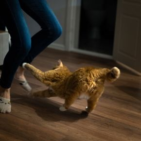 Create a home cat gym with the help of The Vet Whetstone