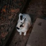 Have you thought about giving a rescue rabbit a home?