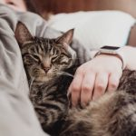 Mental health benefits of having a pet when you're isolated