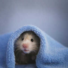 Advice from The Vet Whetstone on whether your small furry pet will hibernate.