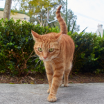The Vet Whetstone shares 7 ways to provide comfortable home care for arthritic cats