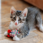 Cat toys and other Christmas gift ideas