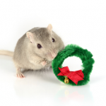 Preparing your home for a small mammal friendly Christmas