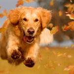 Making new year's resolutions for dogs in North London