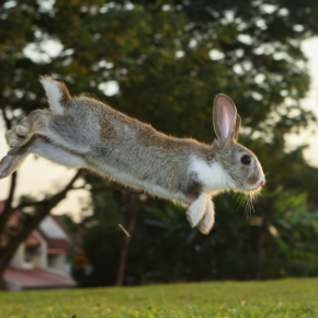 Albert shares 7 wild ways to exercise your rabbit