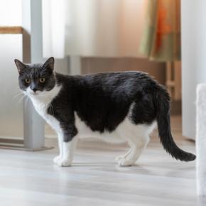 The Vet Whetstone's advice on post-covid cat obesity & separation anxiety