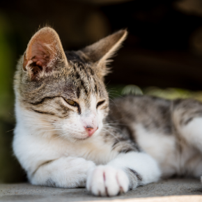 3 important summer disease checks for cats in North London