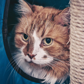 How to find the right cat sitter in North London