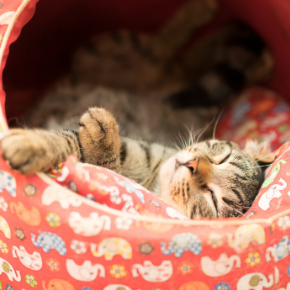 Help, my cat is having kittens! Read our pregnancy advice