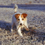 Dog care tips as winter approaches in Whetstone